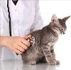 Ветеринарные клиники в Рассказово